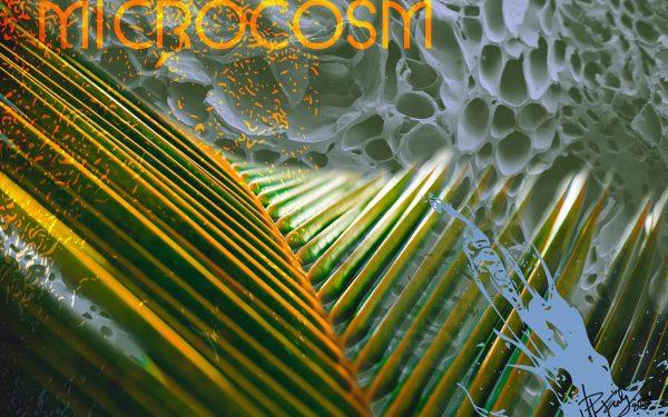 microscosm shop image